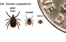 Lyme Disease – what you should know